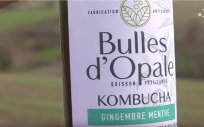 Le Kombucha, la petite boisson qui monte, en fabrication sur la Côte d'Opale